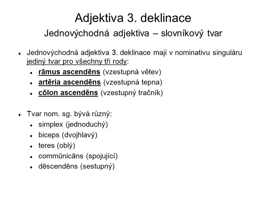 Adjektiva 3. deklinace Jednovýchodná adjektiva – slovníkový tvar Jednovýchodná adjektiva 3. deklinace mají v nominativu singuláru jediný tvar pro všec
