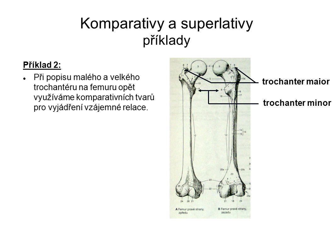 Komparativy a superlativy příklady Příklad 2: Při popisu malého a velkého trochantéru na femuru opět využíváme komparativních tvarů pro vyjádření vzáj