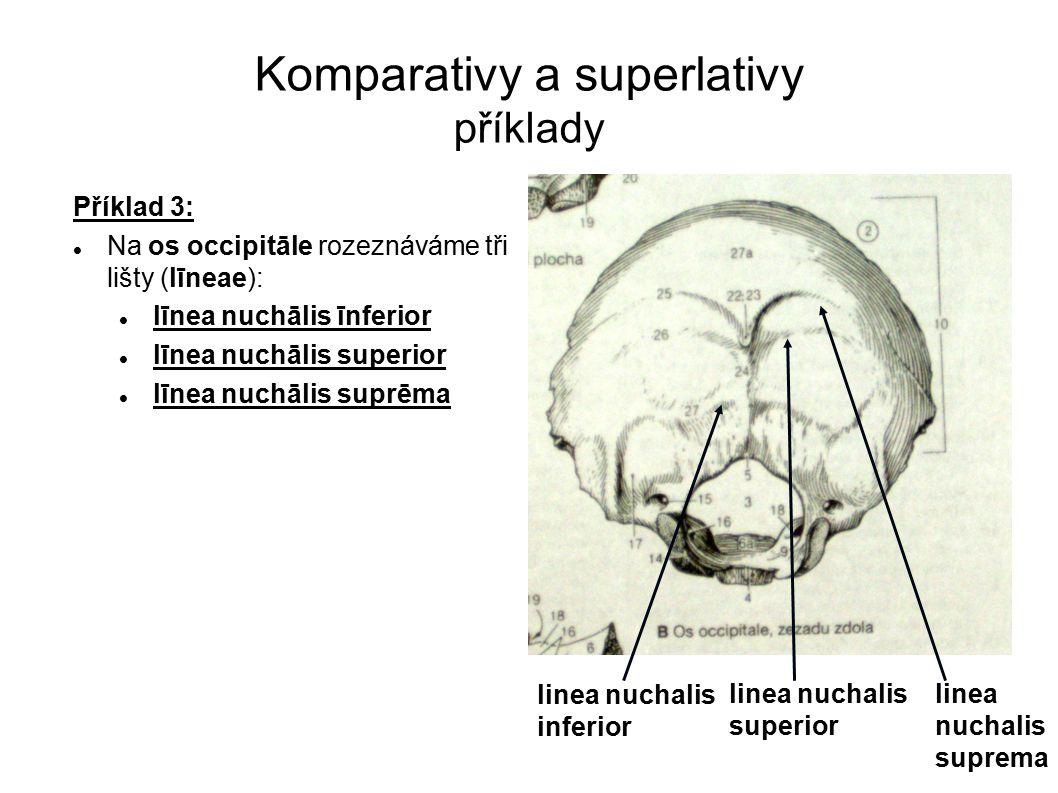 Komparativy a superlativy příklady Příklad 3: Na os occipitāle rozeznáváme tři lišty (līneae): līnea nuchālis īnferior līnea nuchālis superior līnea n