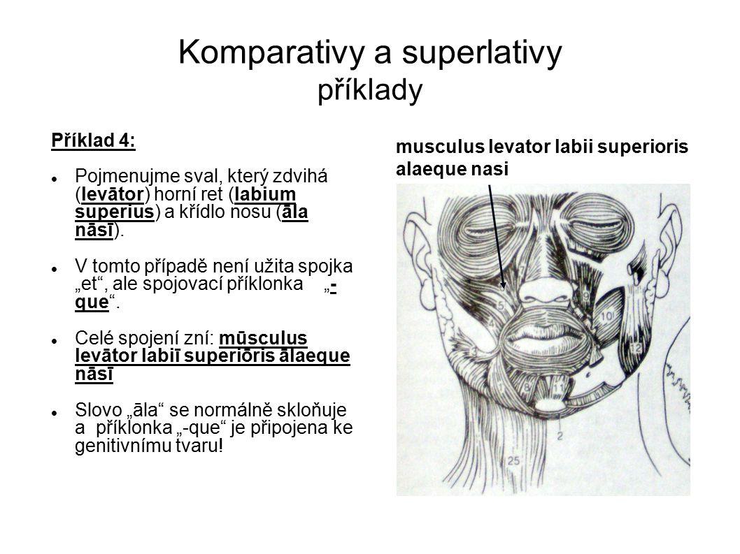 Komparativy a superlativy příklady Příklad 4: Pojmenujme sval, který zdvihá (levātor) horní ret (labium superius) a křídlo nosu (āla nāsī). V tomto př