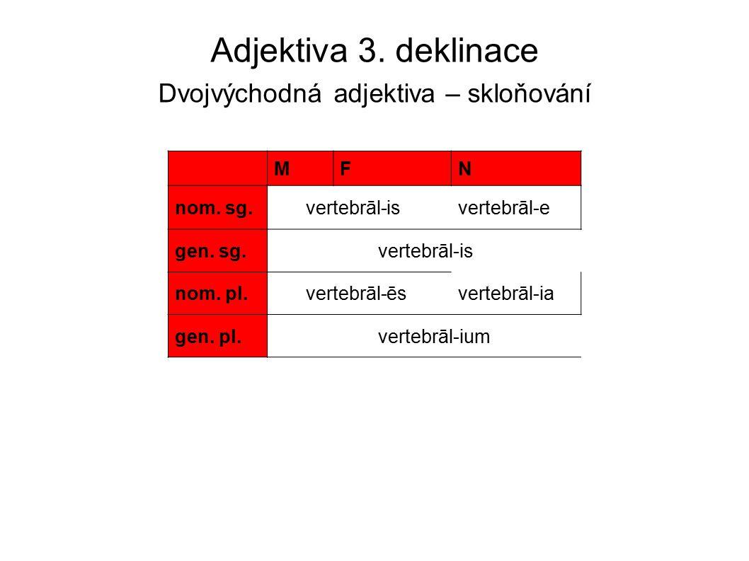 Adjektiva 3. deklinace Dvojvýchodná adjektiva – skloňování MFN nom. sg. vertebrāl-isvertebrāl-e gen. sg. vertebrāl-is nom. pl. vertebrāl-ēsvertebrāl-i