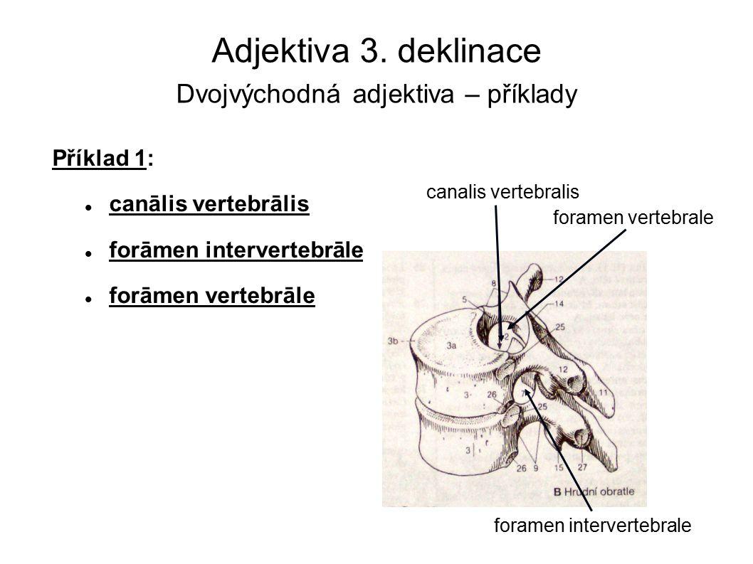 Adjektiva 3. deklinace Dvojvýchodná adjektiva – příklady Příklad 1: canālis vertebrālis forāmen intervertebrāle forāmen vertebrāle canalis vertebralis
