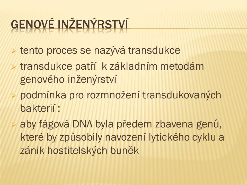  tento proces se nazývá transdukce  transdukce patří k základním metodám genového inženýrství  podmínka pro rozmnožení transdukovaných bakterií :  aby fágová DNA byla předem zbavena genů, které by způsobily navození lytického cyklu a zánik hostitelských buněk