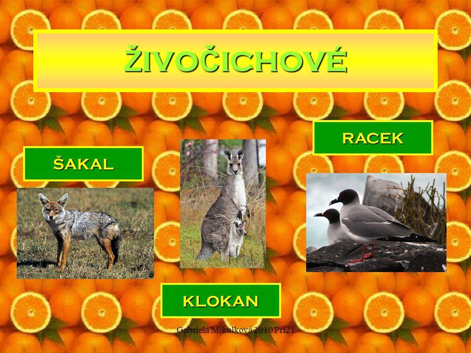 Gabriela Mikulková 2010 Pri21 Ž IVO Č ICHOVÉ ŠAKAL RACEK KLOKAN