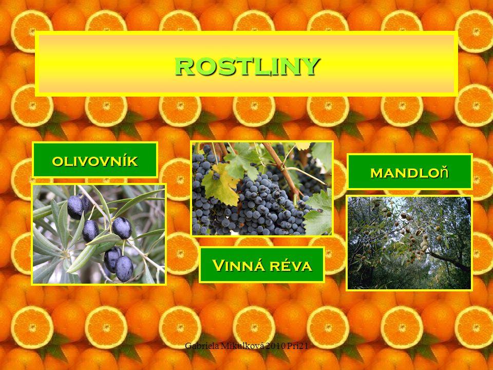 Gabriela Mikulková 2010 Pri21 rostliny citróny pomeran č e mandarinky