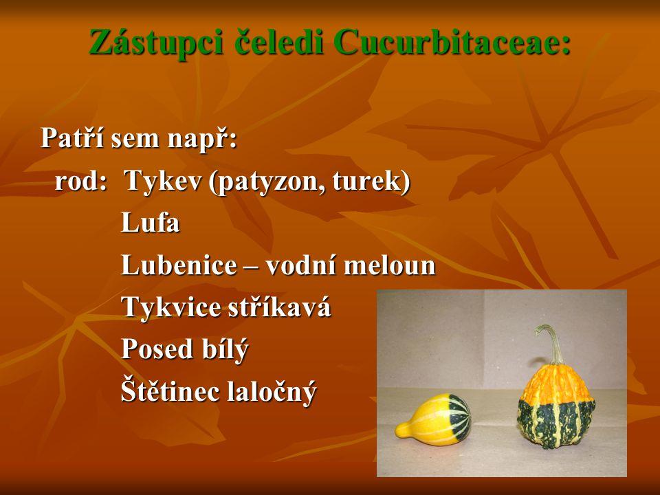 Zástupci čeledi Cucurbitaceae: Patří sem např: rod: Tykev (patyzon, turek) rod: Tykev (patyzon, turek) Lufa Lufa Lubenice – vodní meloun Lubenice – vo