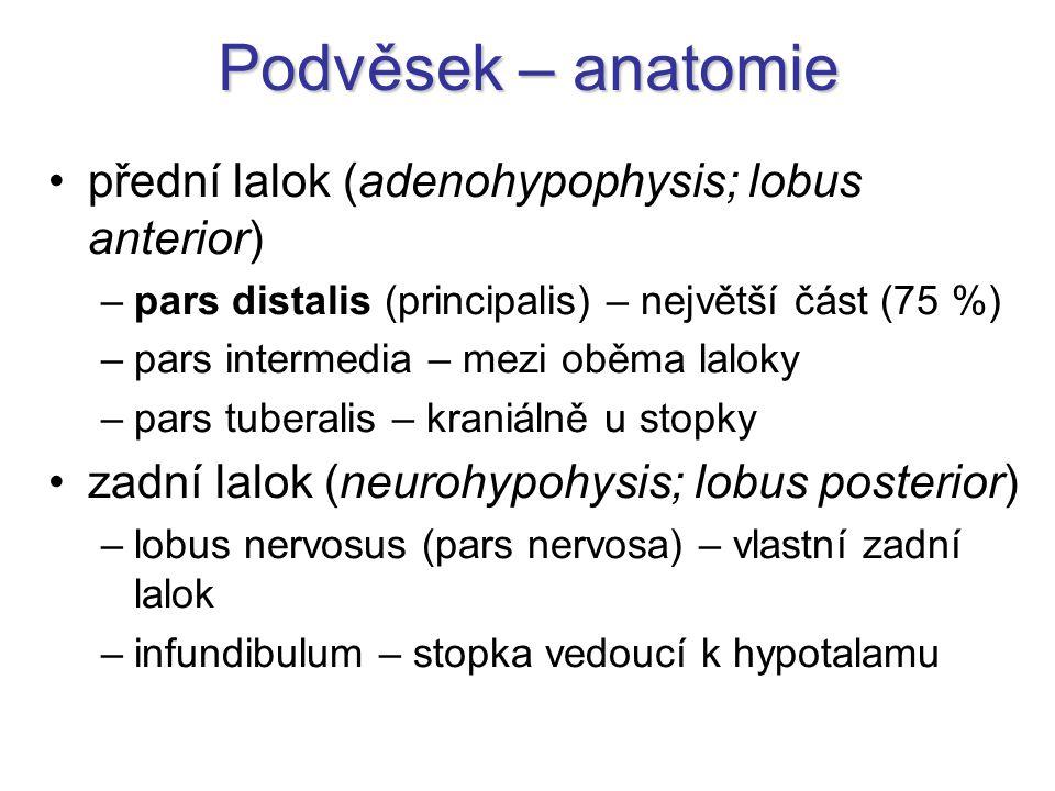 Podvěsek – anatomie přední lalok (adenohypophysis; lobus anterior) –pars distalis (principalis) – největší část (75 %) –pars intermedia – mezi oběma laloky –pars tuberalis – kraniálně u stopky zadní lalok (neurohypohysis; lobus posterior) –lobus nervosus (pars nervosa) – vlastní zadní lalok –infundibulum – stopka vedoucí k hypotalamu