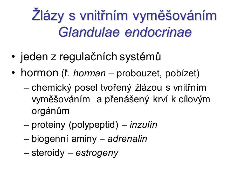 Žlázy s vnitřním vyměšováním Glandulae endocrinae jeden z regulačních systémů hormon (ř.