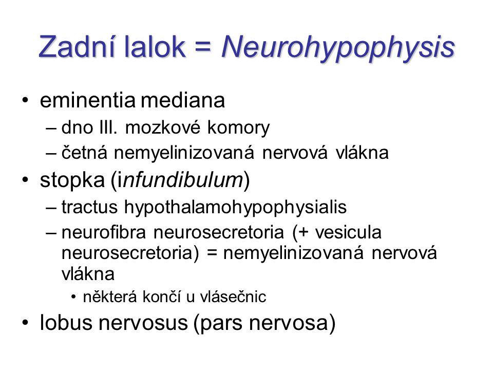 Zadní lalok = Neurohypophysis eminentia mediana –dno III.