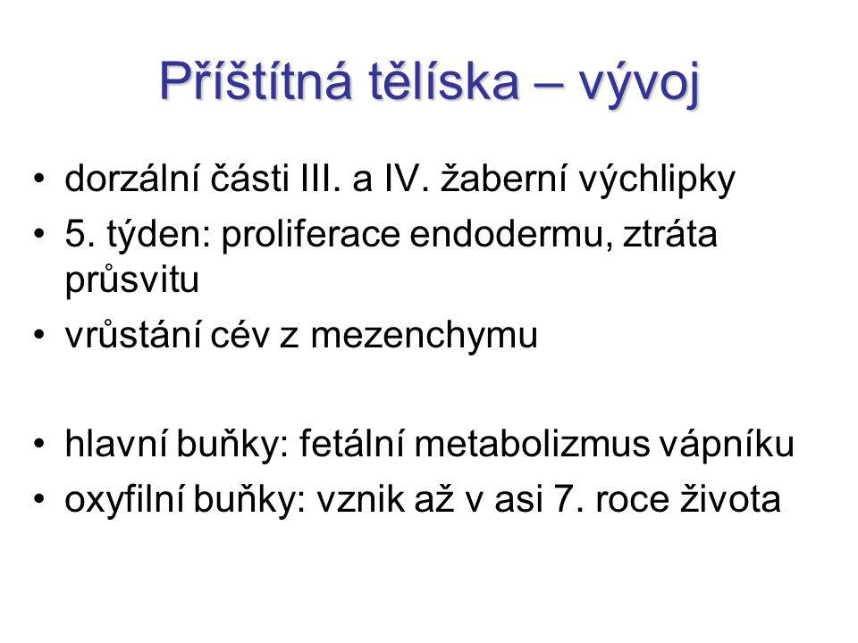 Příštítná tělíska – vývoj dorzální části III.a IV.