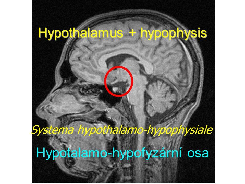 Hypothalamus + hypophysis Hypotalamo-hypofyzární osa Systema hypothalamo-hypophysiale