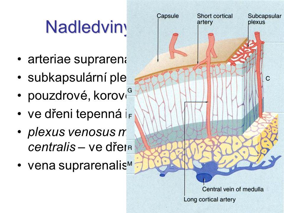 Nadledviny – krevní cévy arteriae suprarenales (3) subkapsulární pleteň pouzdrové, korové a dřeňové tepny ve dřeni tepenná i žilní krev plexus venosus medullaris  vena centralis – ve dřeni vena suprarenalis (1)