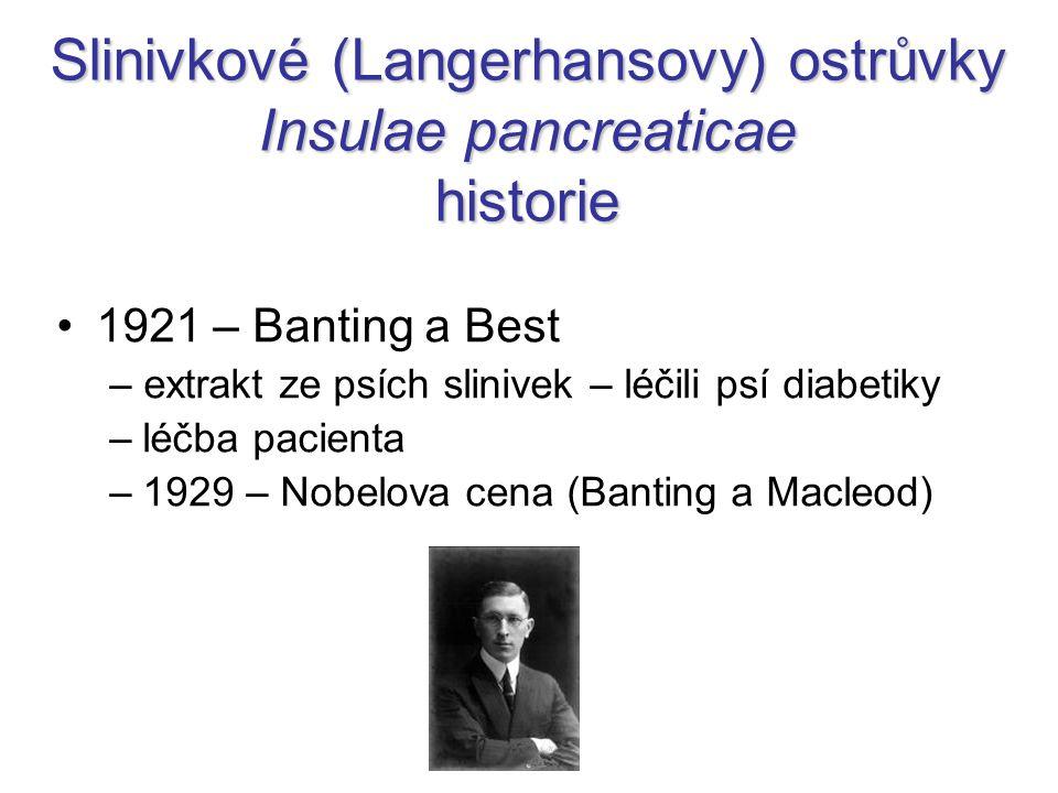 Slinivkové (Langerhansovy) ostrůvky Insulae pancreaticae historie 1921 – Banting a Best – extrakt ze psích slinivek – léčili psí diabetiky –léčba pacienta –1929 – Nobelova cena (Banting a Macleod)