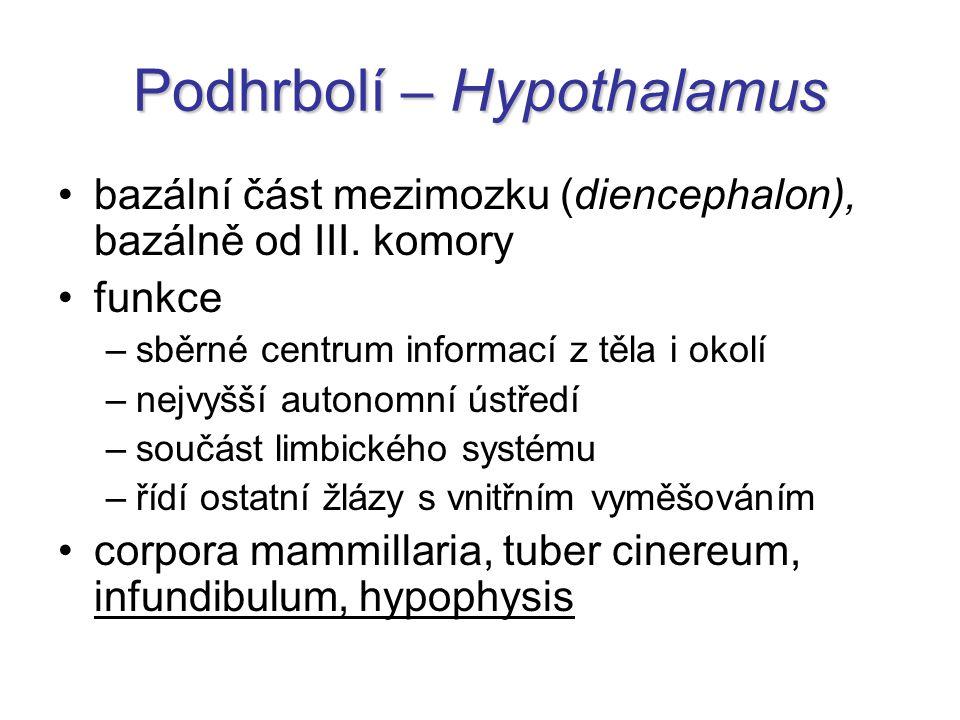 Podhrbolí – Hypothalamus bazální část mezimozku (diencephalon), bazálně od III.