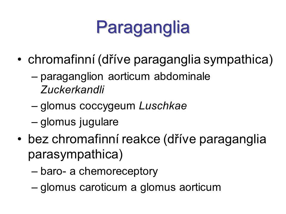 Paraganglia chromafinní (dříve paraganglia sympathica) –paraganglion aorticum abdominale Zuckerkandli –glomus coccygeum Luschkae –glomus jugulare bez chromafinní reakce (dříve paraganglia parasympathica) –baro- a chemoreceptory –glomus caroticum a glomus aorticum