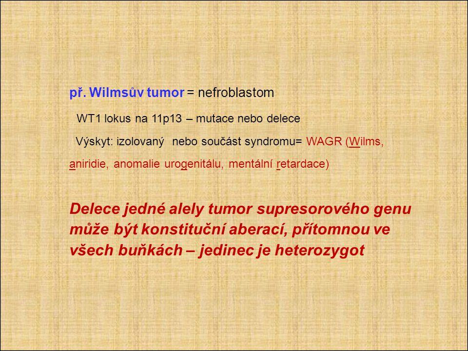př. Wilmsův tumor = nefroblastom WT1 lokus na 11p13 – mutace nebo delece Výskyt: izolovaný nebo součást syndromu= WAGR (Wilms, aniridie, anomalie urog
