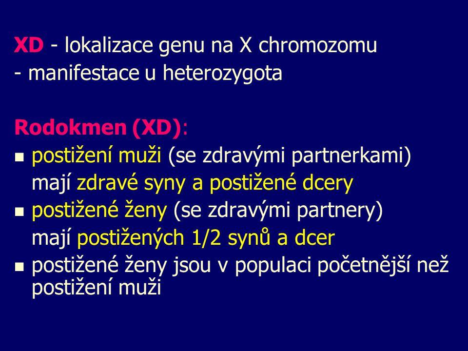 XD - lokalizace genu na X chromozomu - manifestace u heterozygota Rodokmen (XD): postižení muži (se zdravými partnerkami) mají zdravé syny a postižené dcery postižené ženy (se zdravými partnery) mají postižených 1/2 synů a dcer postižené ženy jsou v populaci početnější než postižení muži