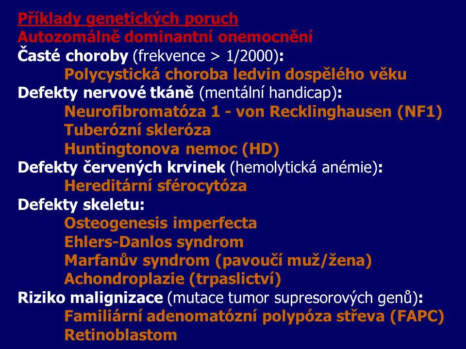 Příklady genetických poruch Autozomálně dominantní onemocnění Časté choroby (frekvence > 1/2000): Polycystická choroba ledvin dospělého věku Defekty nervové tkáně (mentální handicap): Neurofibromatóza 1 - von Recklinghausen (NF1) Tuberózní skleróza Huntingtonova nemoc (HD) Defekty červených krvinek (hemolytická anémie): Hereditární sférocytóza Defekty skeletu: Osteogenesis imperfecta Ehlers-Danlos syndrom Marfanův syndrom (pavoučí muž/žena) Achondroplazie (trpaslictví) Riziko malignizace (mutace tumor supresorových genů): Familiární adenomatózní polypóza střeva (FAPC) Retinoblastom