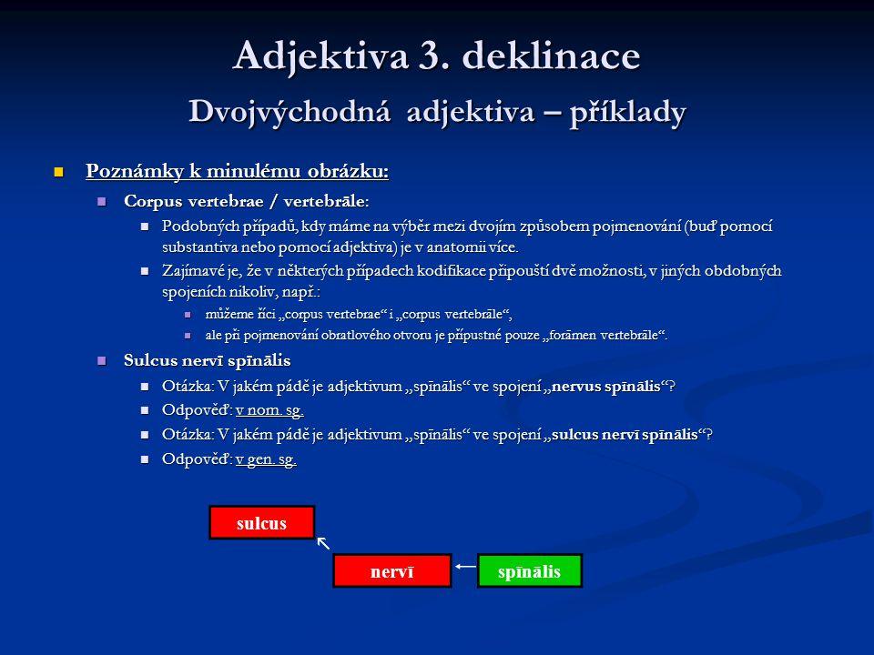 Adjektiva 3.