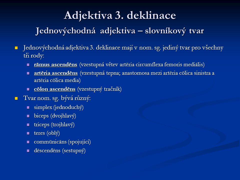 Adjektiva 3.deklinace Jednovýchodná adjektiva – slovníkový tvar Jednovýchodná adjektiva 3.