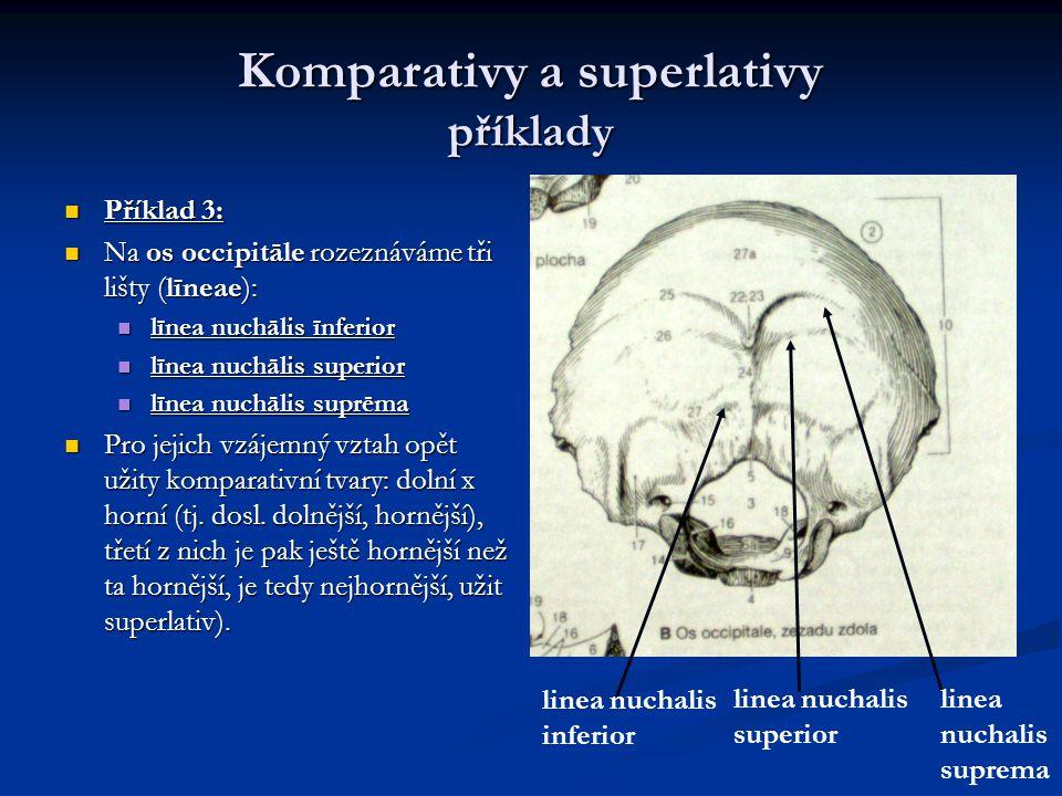 Komparativy a superlativy příklady Příklad 3: Příklad 3: Na os occipitāle rozeznáváme tři lišty (līneae): Na os occipitāle rozeznáváme tři lišty (līneae): līnea nuchālis īnferior līnea nuchālis īnferior līnea nuchālis superior līnea nuchālis superior līnea nuchālis suprēma līnea nuchālis suprēma Pro jejich vzájemný vztah opět užity komparativní tvary: dolní x horní (tj.