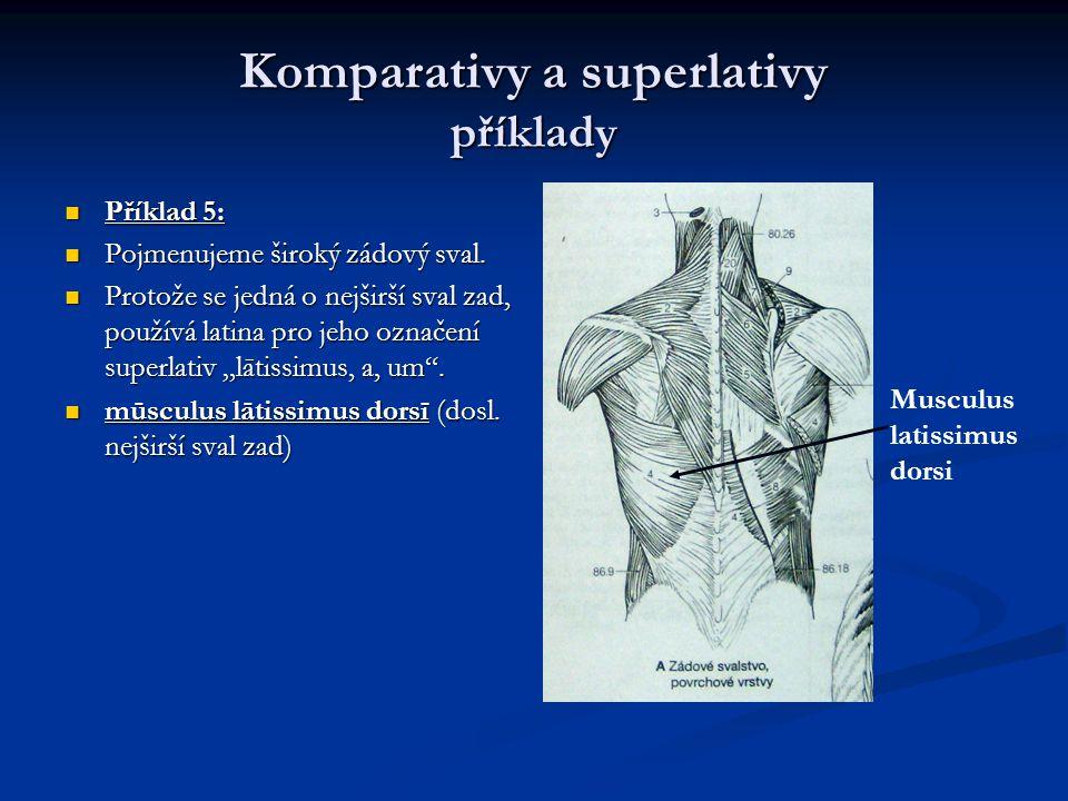 Komparativy a superlativy příklady Příklad 5: Příklad 5: Pojmenujeme široký zádový sval.