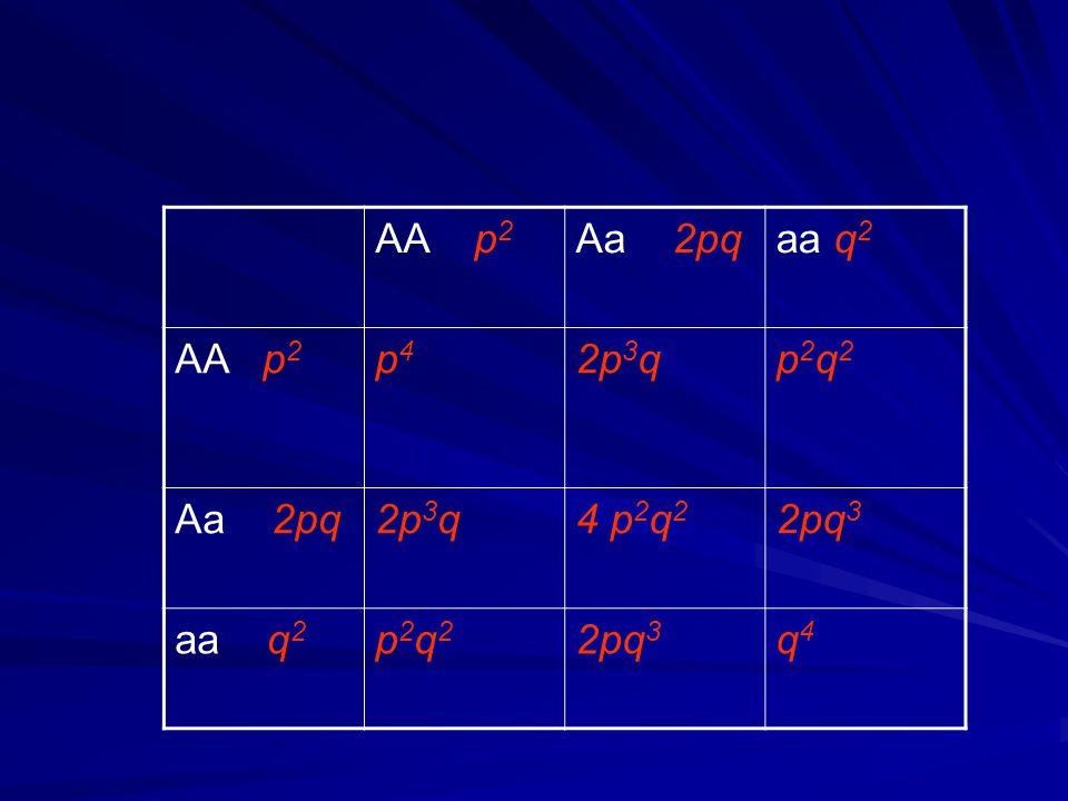 Pro další generaci Rodičovské kombinace Jejich pravděpodobnosti AAAaaa 1.AA x AA p4p4 p4p4 - - 2.AA x Aa 4p 3 q2p 3 q - 3.AA x aa 2p 2 q 2 - - 4.Aa x Aa 4p 2 q 2 p2q2p2q2 2p 2 q 2 p2q2p2q2 5.Aa x aa 4pq 3 -2pq 3 6.aa x aa q4q4 --q4q4 Pravděp.genotypy potomků