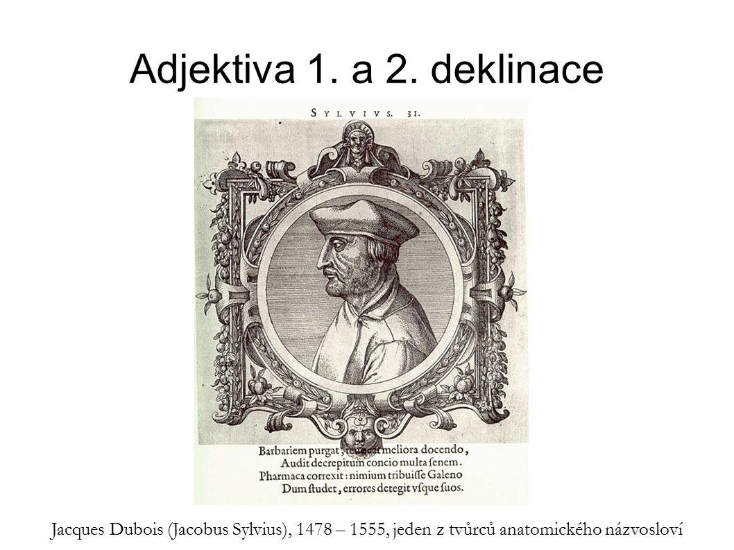 Adjektiva 1. a 2. deklinace Jacques Dubois (Jacobus Sylvius), 1478 – 1555, jeden z tvůrců anatomického názvosloví