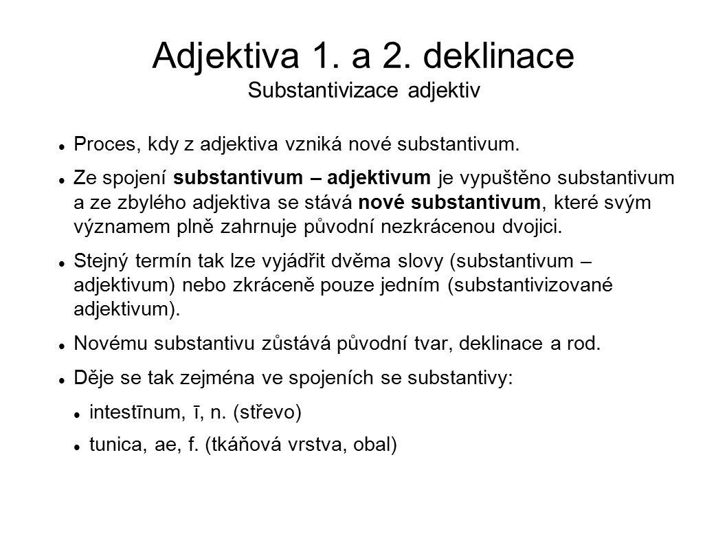 Adjektiva 1. a 2. deklinace Substantivizace adjektiv Proces, kdy z adjektiva vzniká nové substantivum. Ze spojení substantivum – adjektivum je vypuště