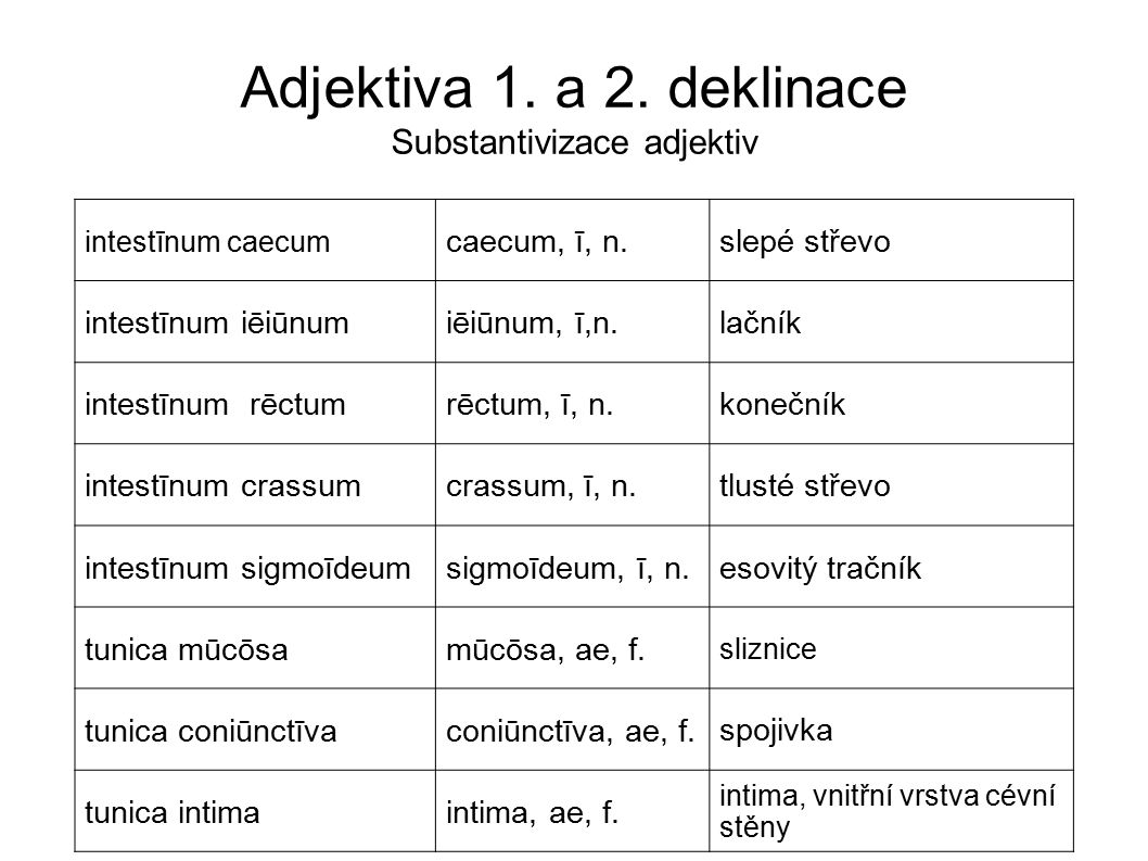 Adjektiva 1. a 2. deklinace Substantivizace adjektiv intestīnum caecum caecum, ī, n. slepé střevo intestīnum iēiūnumiēiūnum, ī,n. lačník intestīnum rē