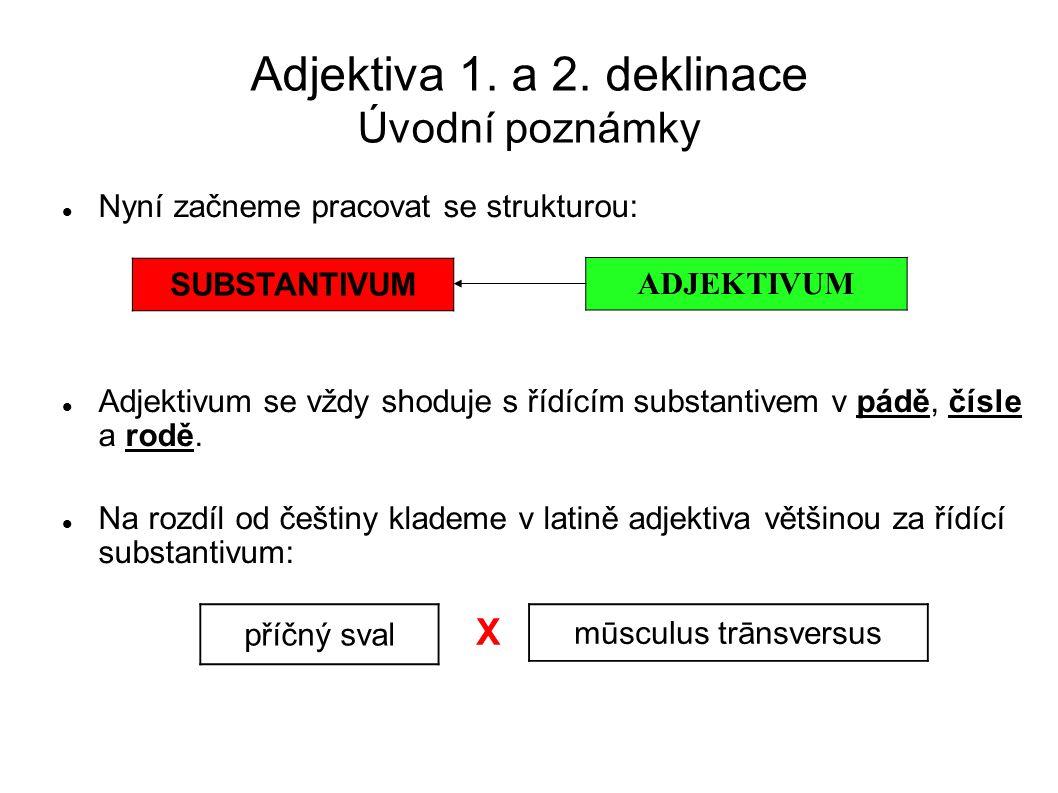 Adjektiva 1. a 2. deklinace Úvodní poznámky Nyní začneme pracovat se strukturou: Adjektivum se vždy shoduje s řídícím substantivem v pádě, čísle a rod