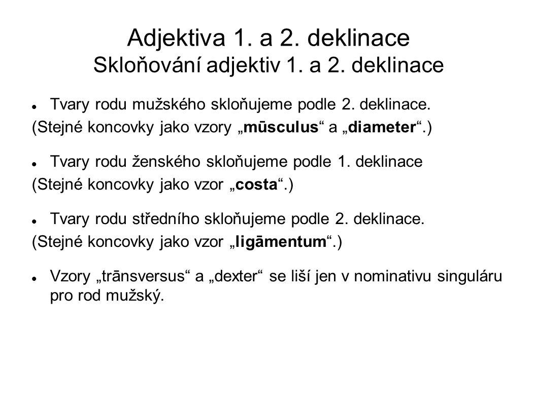 """Adjektiva 1. a 2. deklinace Skloňování adjektiv 1. a 2. deklinace Tvary rodu mužského skloňujeme podle 2. deklinace. (Stejné koncovky jako vzory """"mūsc"""