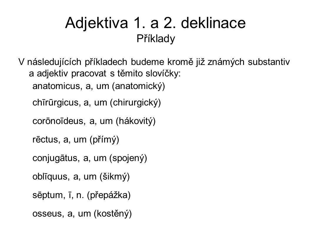 Adjektiva 1. a 2. deklinace Příklady V následujících příkladech budeme kromě již známých substantiv a adjektiv pracovat s těmito slovíčky: anatomicus,