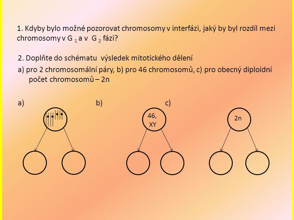 1. Kdyby bylo možné pozorovat chromosomy v interfázi, jaký by byl rozdíl mezi chromosomy v G 1 a v G 2 fázi? 2. Doplňte do schématu výsledek mitotické