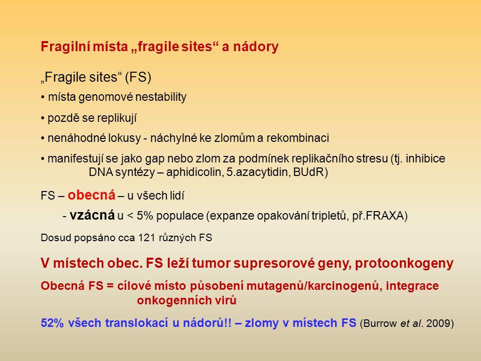 """Fragilní místa """"fragile sites"""" a nádory """" Fragile sites"""" (FS) místa genomové nestability pozdě se replikují nenáhodné lokusy - náchylné ke zlomům a re"""
