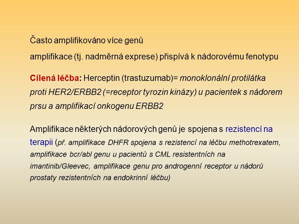 Často amplifikováno více genů amplifikace (tj. nadměrná exprese) přispívá k nádorovému fenotypu Cílená léčba: Herceptin (trastuzumab)= monoklonální pr
