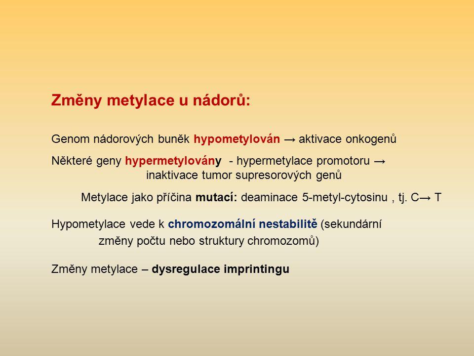 Změny metylace u nádorů: Genom nádorových buněk hypometylován → aktivace onkogenů Některé geny hypermetylovány - hypermetylace promotoru → inaktivace
