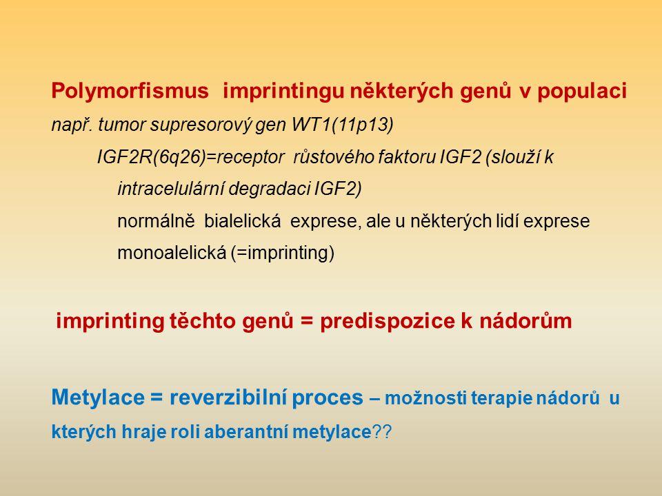 Polymorfismus imprintingu některých genů v populaci např. tumor supresorový gen WT1(11p13) IGF2R(6q26)=receptor růstového faktoru IGF2 (slouží k intra