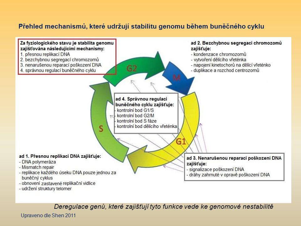 Přehled mechanismů, které udržují stabilitu genomu během buněčného cyklu Upraveno dle Shen 2011 Deregulace genů, které zajišťují tyto funkce vede ke g