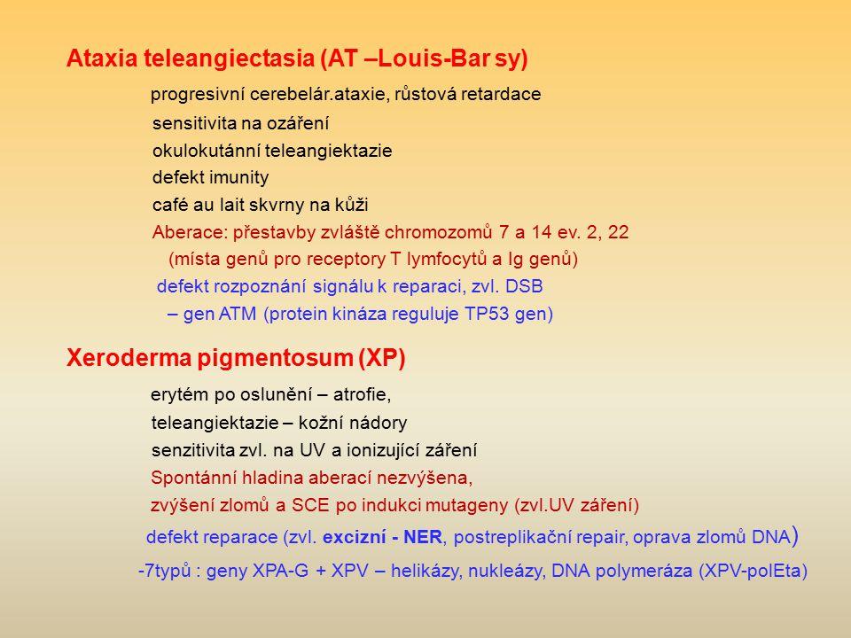 Ataxia teleangiectasia (AT –Louis-Bar sy) progresivní cerebelár.ataxie, růstová retardace sensitivita na ozáření okulokutánní teleangiektazie defekt i