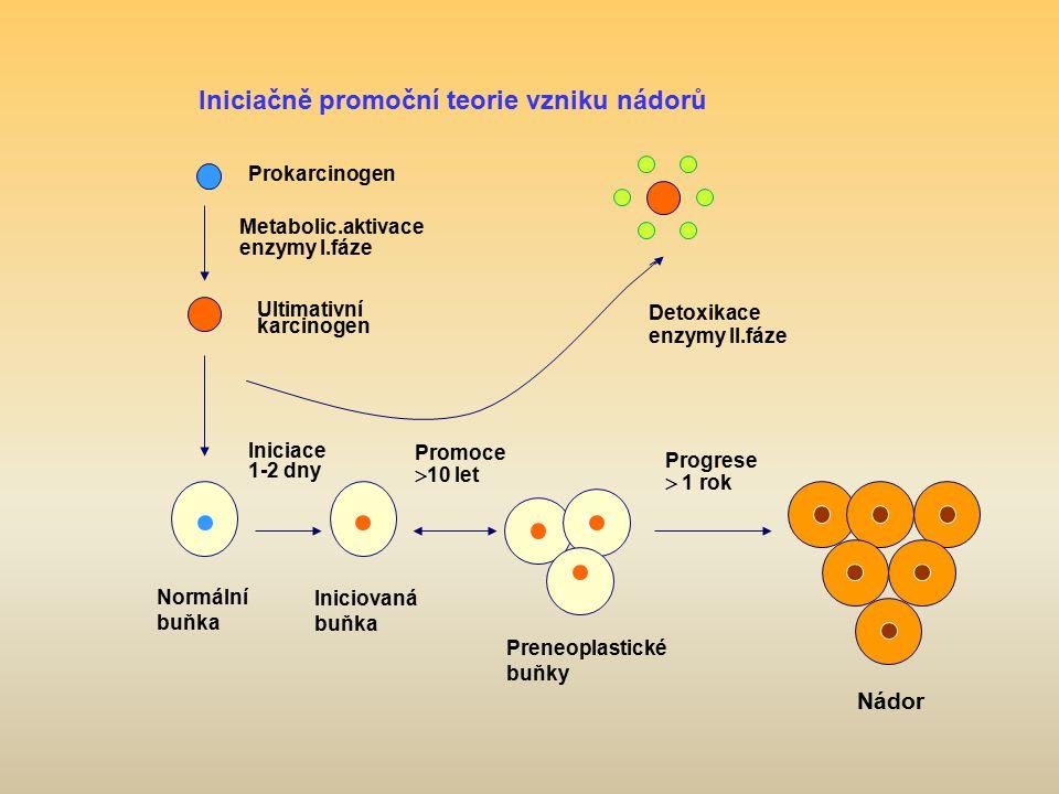 v Prokarcinogen Metabolic.aktivace enzymy I.fáze Ultimativní karcinogen Normální buňka Iniciovaná buňka Preneoplastické buňky Nádor Detoxikace enzymy