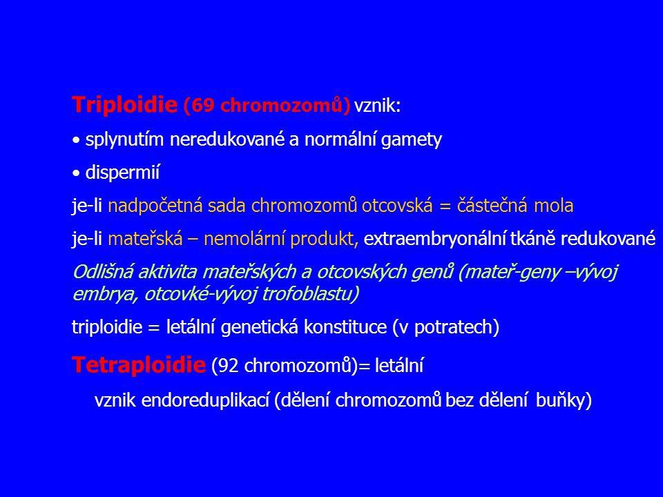 Triploidie (69 chromozomů) vznik: splynutím neredukované a normální gamety dispermií je-li nadpočetná sada chromozomů otcovská = částečná mola je-li m