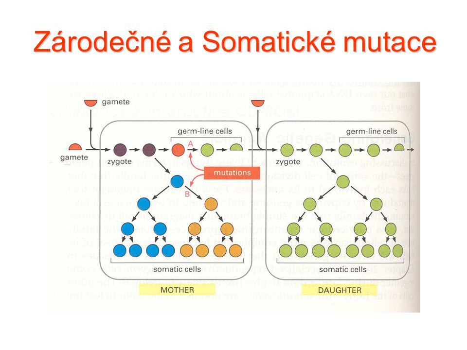 Zárodečné a Somatické mutace