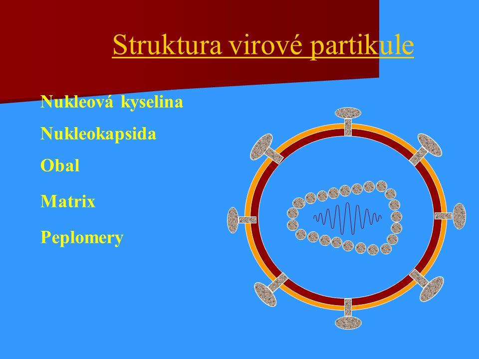 Nukleová kyselina Nukleokapsida Obal Matrix Peplomery Struktura virové partikule
