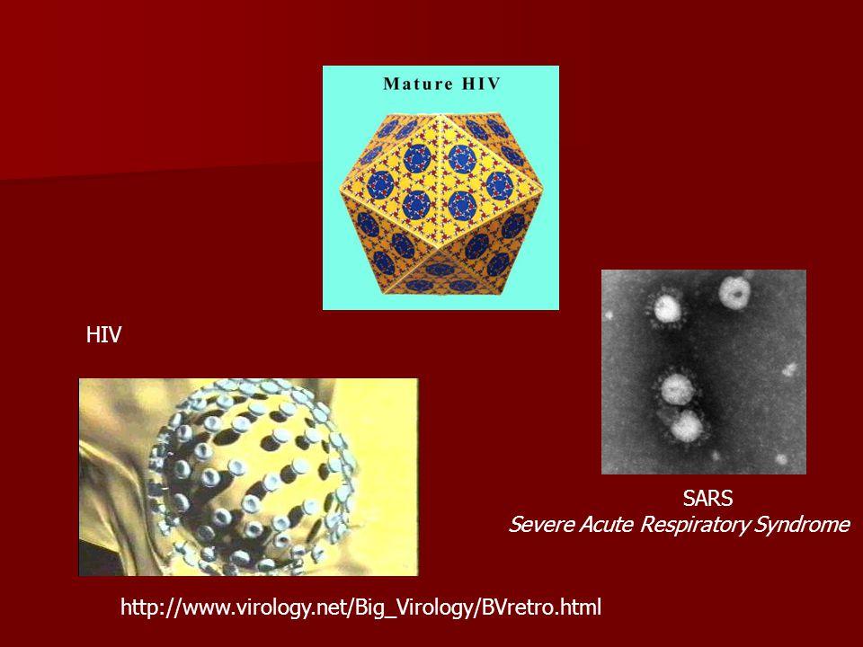 HIV SARS Severe Acute Respiratory Syndrome http://www.virology.net/Big_Virology/BVretro.html