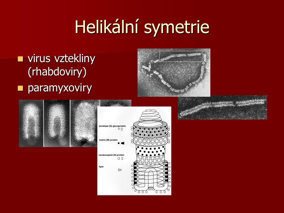 Helikální symetrie virus vztekliny (rhabdoviry) virus vztekliny (rhabdoviry) paramyxoviry paramyxoviry