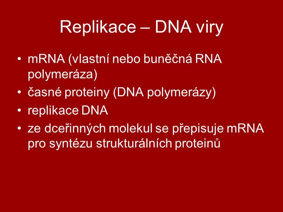 Replikace – DNA viry mRNA (vlastní nebo buněčná RNA polymeráza) časné proteiny (DNA polymerázy) replikace DNA ze dceřinných molekul se přepisuje mRNA