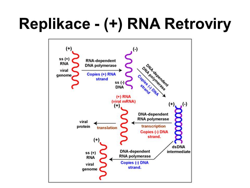 Replikace - (+) RNA Retroviry