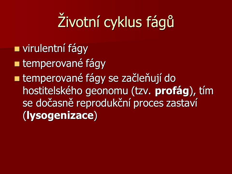 Životní cyklus fágů virulentní fágy virulentní fágy temperované fágy temperované fágy temperované fágy se začleňují do hostitelského geonomu (tzv.