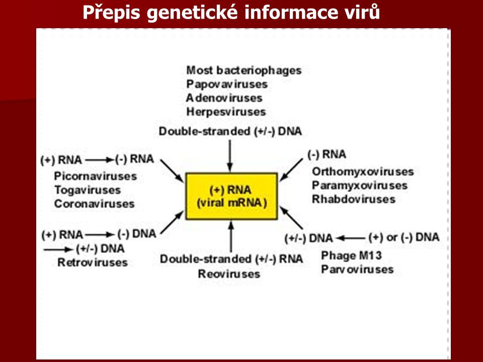 Viry rostlinné – pokr.